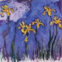 yellow-irises-with-pink-cloud-1917