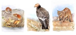 Extinct animals vancouver museum