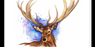 Deer by Annie Dalton